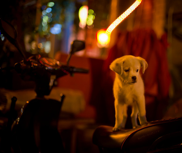 Sad And Alone: Taking Your Dog Abroad? What You Need To Know
