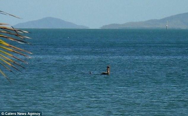 Loch Ness Monster Sighting In Australia 365 Days Of Travel